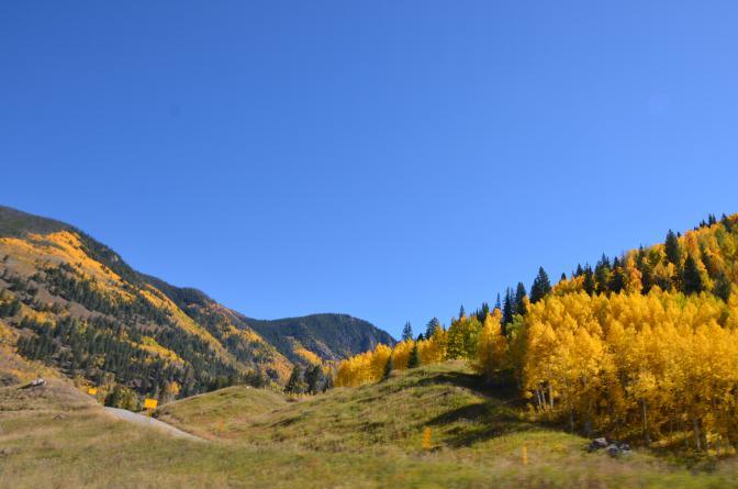 Aspen - Fall Foliage